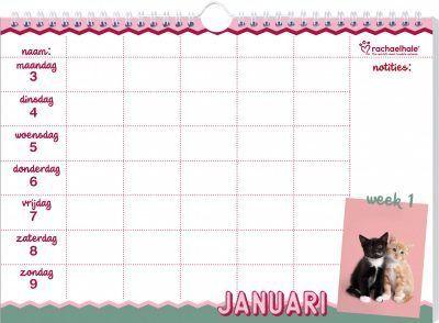 Katten Familieplanner 2022 – Rachael Hale Dieren kalenders